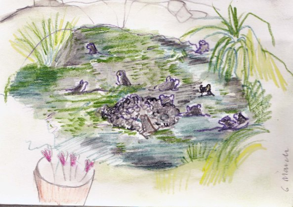 Frogs in my garden pond, March 2014